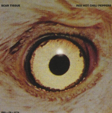 Scar Tissue Red Hot Chili Peppers